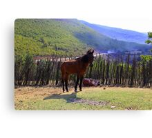 Wild Horse - Nature Photography Canvas Print