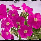 Pink Petunias by Sandra Foster