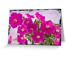 Pink Petunias Greeting Card