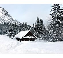 Snow forest Photographic Print