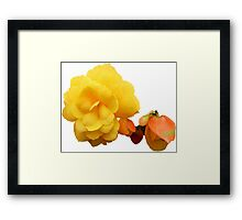 Yellow Begonia. Framed Print