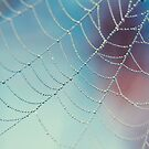 Spider Web by Bloom by Sam Wales