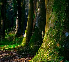 Longleat Forest - Trees at Autumn by Luke Farmer