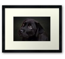 P is for.....Puppy dog eyes Framed Print