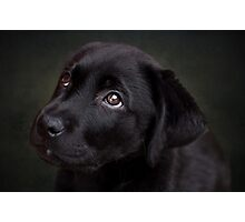 P is for.....Puppy dog eyes Photographic Print