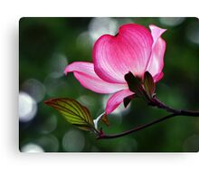 Glowing Dogwood Canvas Print