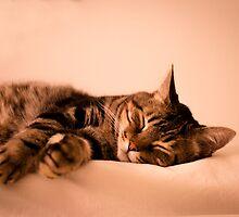 Tabby cat sleeping by GemaIbarra