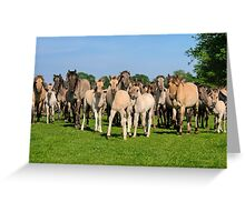 A Wild Herd of Dulmen Horses with Foals Greeting Card