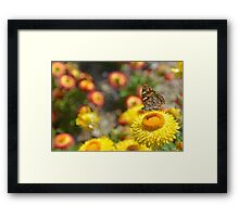 Painted Lady on Paper Daisy Framed Print
