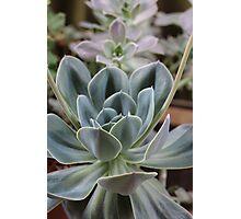 Aileen's Garden's gone Cactus ! Photographic Print