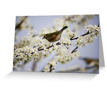 Little Sparrow Wild Bird Design Greeting Card