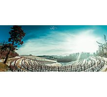 snowy morning in the vineyard Photographic Print