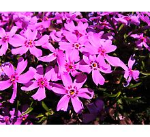 violet flowers in pattern Photographic Print