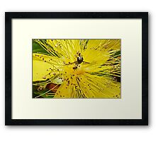 Insect Attraction Framed Print