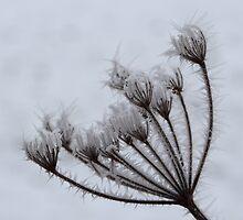 Hoar Frost by Adam Wain