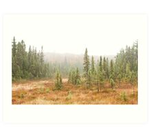 Fog in Algonquin Park, Canada Art Print