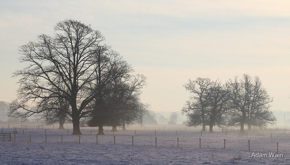 Winter Trees by Adam Wain