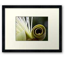 Pseudobombax flower abstract Framed Print