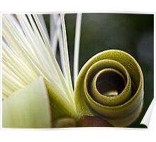 Pseudobombax flower abstract Poster