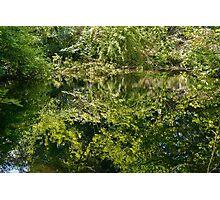 Forêt Verte Nature Photo Print   Photographic Print