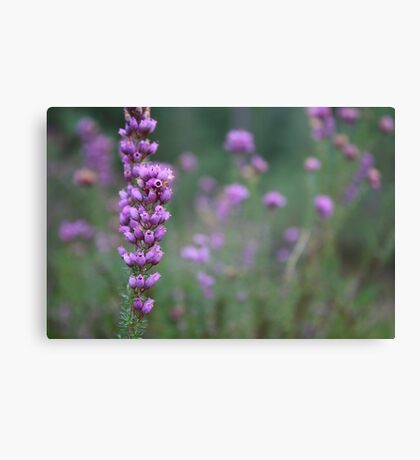 Wild Flower Canvas Print