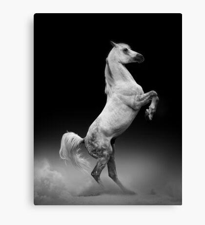arab stallion rearing Canvas Print