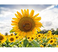 Bee on Sunflower Photographic Print
