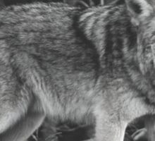Powerful Wolf in Black and White Sticker