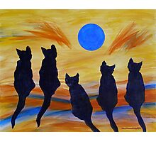 Five Meows See the Wild Blue Photographic Print