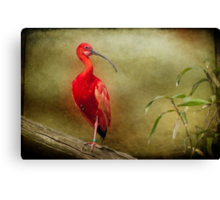 Show off! Canvas Print