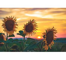 Sunflowers During Sunset Photographic Print