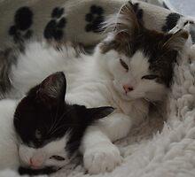 Fluffy Kitten Brothers by QueenPotato
