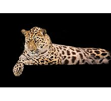 Wild Cats - Amur Leopard Photographic Print