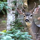 Young Buck... by RichImage