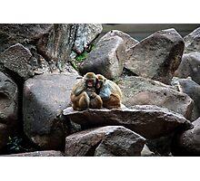 Monkey happy family  Photographic Print