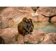 Monkey happy family  Photographic Print