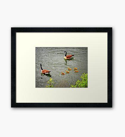 Geese Family Framed Print
