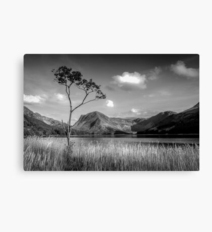 The Lone Tree Buttermere Canvas Print