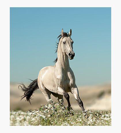 beautiful stallion Photographic Print