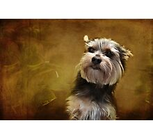 Meet Chalky! Photographic Print