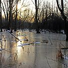 Golden Ice Path by Debbie Oppermann