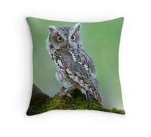 Screech Owl on Rock Throw Pillow