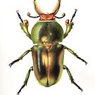Golden Green Stag Beetle by Cheryl Hodges