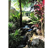Water Feature, Thursday Plantation. Ballina. N.S.W. Nth. Coast. Photographic Print