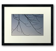 Tree Branch Sillhouettes Framed Print
