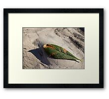Somewhere Between Summer and Fall Framed Print
