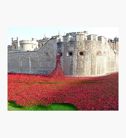 Ceramic Poppies at Tower  of London Photographic Print