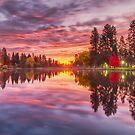 Drake Park Lights at Dawn by John Williams