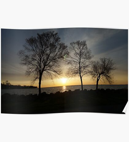 Tree on a lake in a sunset Poster