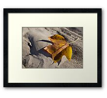 Tulip Tree Leaf - Shadow and Light Framed Print